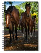 Inquisitive Horses Spiral Notebook