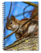 Inquisitive Squirrel Spiral Notebook