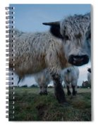 Inquisitive White High Park Cow Spiral Notebook
