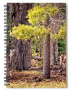Inquisitive Whitetail Deer Spiral Notebook