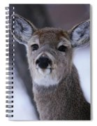 Inquisitive Yearling Spiral Notebook