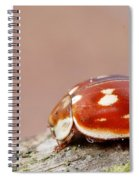 Insect Spiral Notebook