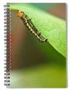 Insect Larva 2 Spiral Notebook