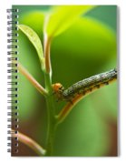 Insect Larva 5 Spiral Notebook