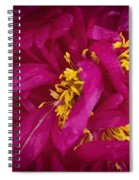 Inside The Peony Spiral Notebook