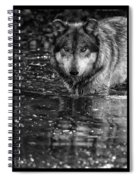 Intense Reflection Spiral Notebook