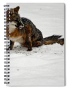 Intent Red Fox Spiral Notebook