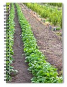 Intercropped Trees And Beans Spiral Notebook
