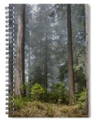 Into The Redwood Forest Spiral Notebook