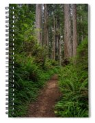 Into The Redwoods Spiral Notebook