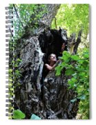 Into The Tree Spiral Notebook