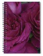 Intrigue Rose Spiral Notebook