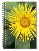 Inula Grandiflora Spiral Notebook
