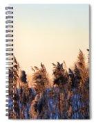 Iowa Cane Spiral Notebook