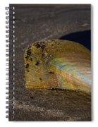 Iridescent Pen Shell  Spiral Notebook