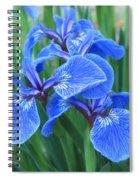 Iris Floral  Spiral Notebook