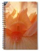 Iris Flower Art Prints Sunlit Orange Irises Baslee Troutman Spiral Notebook
