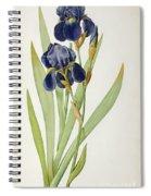 Iris Germanica Spiral Notebook