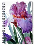 Watercolor Of A Tall Bearded Iris In Pink, Lilac And Red I Call Iris Pavarotti Spiral Notebook