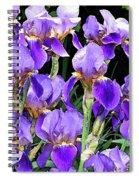Iris Splendor Spiral Notebook