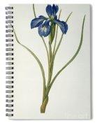 Iris Xyphioides Spiral Notebook