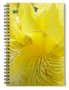 Irises Yellow Brown Iris Flowers Irises Art Prints Baslee Troutman Spiral Notebook