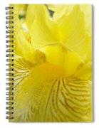 Irises Yellow Brown Iris Flowers Irises Art Prints Baslee Troutman Spiral Notebook