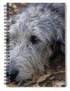 Irish Wolfhound Ivan Spiral Notebook