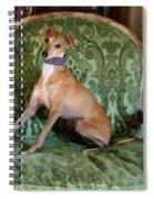 Italian Greyhound Portrait Spiral Notebook