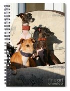 Italian Greyhounds Spiral Notebook