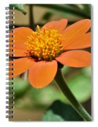 Ithonia Rotundifolia Spiral Notebook
