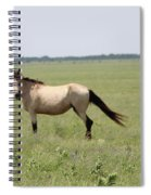 It's A Horse Of  Course Spiral Notebook