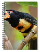 It's All About The Beak Spiral Notebook