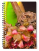 Itsy Bitsy Spider Over Mango  Tree Flowers Spiral Notebook