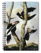 Ivory-billed Woodpeckers Spiral Notebook