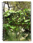Ivy-covered Arch At The Alamo Spiral Notebook