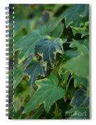 Ivy Greens Spiral Notebook