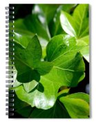 Ivy In Sunlight Spiral Notebook