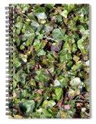 Ivy Ivy Ivy Spiral Notebook