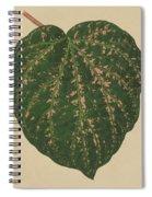 Ivy Leaf, Cissus Porphyrophyllus  Spiral Notebook