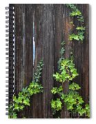 Ivy On Fence Spiral Notebook