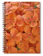 Ixora Moriwaki Spiral Notebook