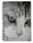 Izzy's Beauty Spiral Notebook