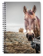 Jacketed Horse Spiral Notebook