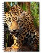 Jaguar Adolescent Spiral Notebook