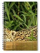 Jaguar Approaches Cayman Spiral Notebook