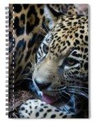 Jaguar Cub Spiral Notebook