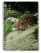 Jaguar Spiral Notebook