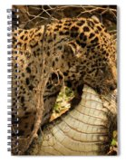 Jaguar Dragging Dead Yacare Caiman Through Undergrowth Spiral Notebook