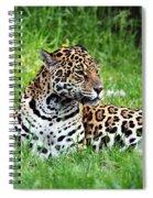 Jaguar Spiral Notebook